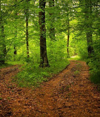path-1345721_1280