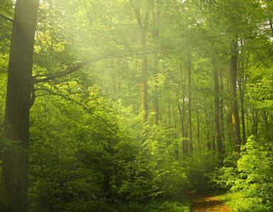 skogenskogen