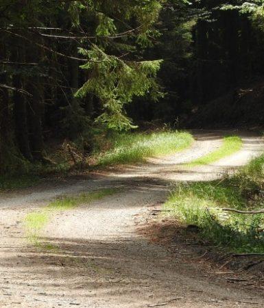 skogsväg-toppen