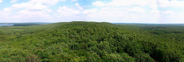 Utsikt från Mugglarberget - hyfsad skog i Berlin...
