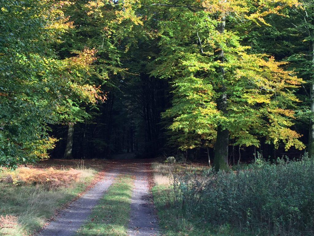 skogsväg 7